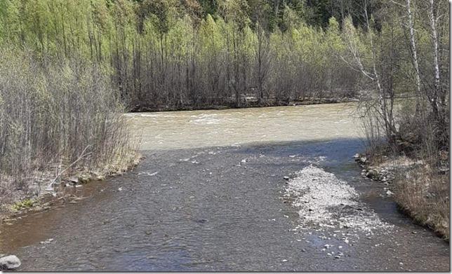 Река ниже участков золотодобычи в Селемжинском районе Амурской области